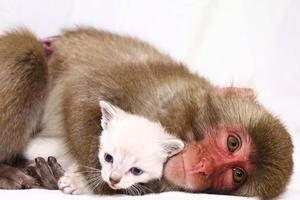 Μια μαϊμού που λατρεύει τις γάτες