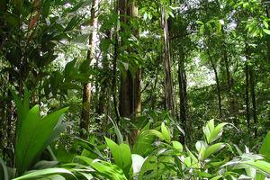 Τα φυτά απορροφούν περισσότερο διοξείδιο του άνθρακα από την ατμόσφαιρα