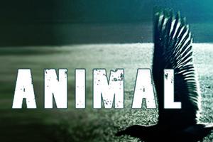 Την Παρασκευή ανοίγει το Animal club στο Κολωνάκι