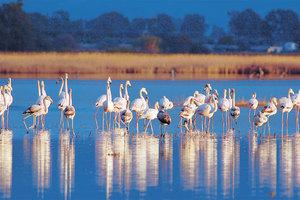 «Σώστε τα Μεταναστευτικά Πουλιά»