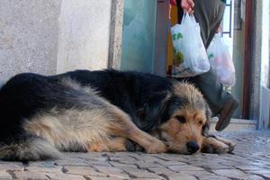 Εκδήλωση στον Πειραιά για τα δικαιώματα των ζώων