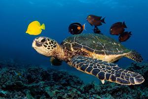 Απελευθέρωση χελώνας καρέτα καρέτα στο Ρέθυμνο