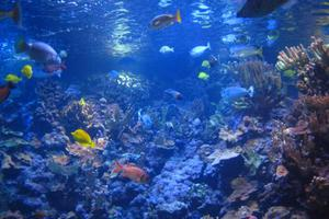 Πηγή βιολογικού πλούτου τα θαλάσσια μικρόβια