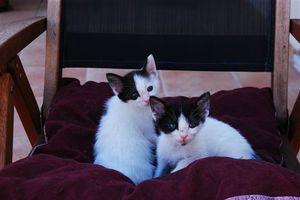 Νεογέννητες γάτες ψάχνουν φιλόζωους για υιοθεσία