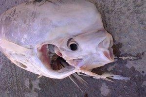 Ψάρεψαν άγνωστο ψάρι στην Κρήτη