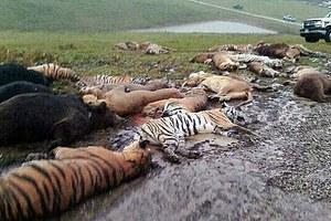 Άφησε ελεύθερα δεκάδες άγρια ζώα και αυτοκτόνησε