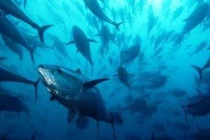 Ευρωπαίοι σεφ ζητούν τη μεταρρύθμιση της αλιευτικής πολιτικής