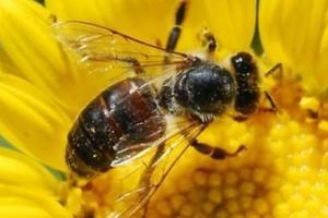 Οι μικρές, ακούραστες και θαυματουργές μέλισσες