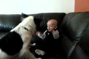 Ευεργετική για τα βρέφη η επαφή με τους σκύλους