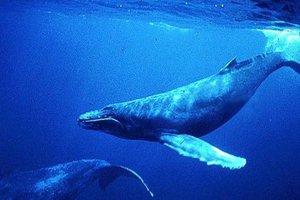 Ένα χρηματιστήριο για τις φάλαινες