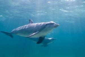 Δελφίνια επιστρατεύει το αμερικανικό Ναυτικό