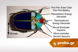Λέτε τα πρώτα cyborg να είναι έντομα(!);