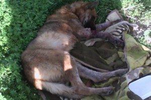 Ελεύθερος ο 66χρονος που κατηγορείται ότι τραυμάτισε θανάσιμα το σκυλί της γειτόνισσάς του