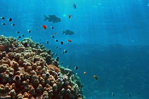«Κόκκινος συναγερμός» για ψάρια, φυτά και αμφίβια