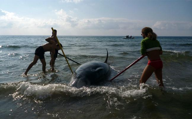 falainadelfini4 Ξεβράζονται φάλαινες στην Κέρκυρα