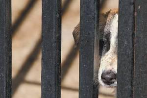 Ψάχνουν τους δολοφόνους σκύλων