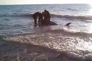 Τα πολεμικά σκάφη ευθύνονται για τους θανάτους φαλαινών