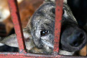 Τάφος με δεκάδες σκυλιά στην Ηλεία