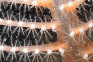 Υποβρύχια... χριστουγεννιάτικη διακόσμηση!