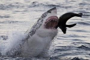 Στα σαγόνια του καρχαρία!