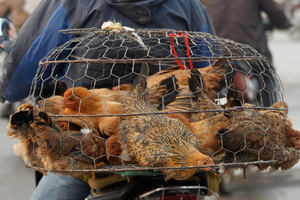 Νέος θάνατος στην Κίνα από τη γρίπη των πτηνών