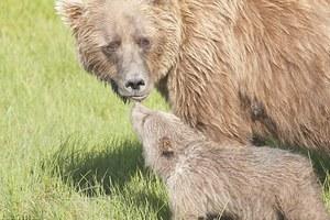 Ο κόσμος μέσα από τα μάτια των αρκούδων