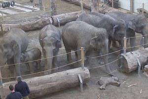 Απίστευτο βίντεο από τους ελέφαντες που πενθούν