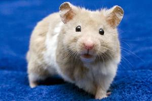 Άκακα ποντίκια μετατράπηκαν σε φονικές μηχανές