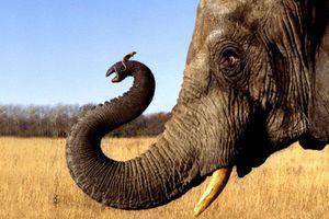 Η εξέλιξη των θηλαστικών διήρκησε 24 εκατομμύρια γενιές