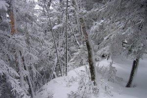 Ξεψύχησε στο δάσος που πήγε για να μαζέψει ξύλα