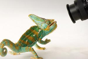 Απίστευτες φωτογραφίες της άγριας ζωής στο... στούντιο
