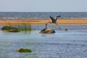 Η Κομισιόν απειλεί με παραπομπή για τις περιοχές «Natura»