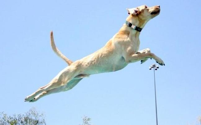 Πετάνε οι σκύλοι;