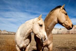 Άλογα εκατομμυριούχου πέθαιναν από την πείνα