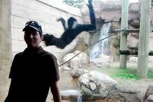 Μαϊμού προσπάθησε να «επιτεθεί» σε επισκέπτη ζωολογικού κήπου