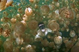 Κολυμπώντας ανάμεσα σε εκατομμύρια μέδουσες