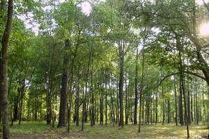 Απαγόρευση κυκλοφορίας σε δάση της Βοιωτίας