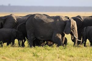 Η κρυφή γλώσσα των ελεφάντων