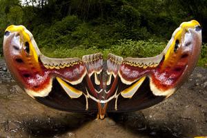 Το μεγαλύτερο έντομο του κόσμου