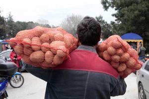 Θήβα: Πήγαν βράδυ να κλέψουν σακιά πατάτες αλλά συνελήφθησαν