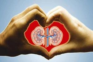 Πρωτιά Κροατίας στις μεταμοσχεύσεις καρδιάς και νεφρών