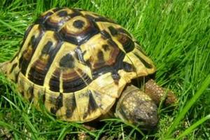 Διάσωση χελωνών μέσω GPS