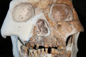 Ανθρώπινο κρανίο και οστά βρήκαν στην Αιδηψό