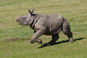 Κατασχέθηκαν 735 κιλά κεράτων ρινόκερου και ελεφαντόδοντου