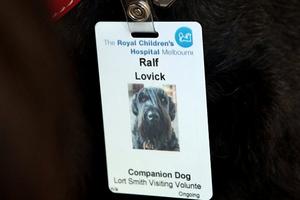 Ο σκύλος «νοσοκόμος» που χαρίζει χαμόγελο στα παιδιά!