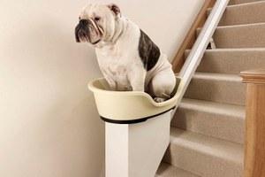 Ανελκυστήρας για υπέρβαρους σκύλους