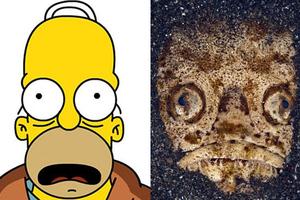 Ο Homer Simpson έγινε… ψάρι