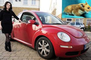 Διέλυσε το αυτοκίνητό της για να βρει το χάμστερ της