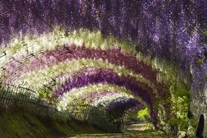 Οι κρεμαστοί κήποι της Ιαπωνίας!