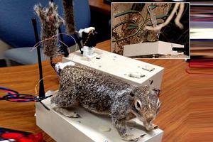 Ρομποτικοί σκίουροι αντιμέτωποι με τους κροταλίες της Καλιφόρνια